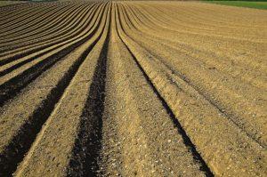 Fertilizantes-1149914_1920